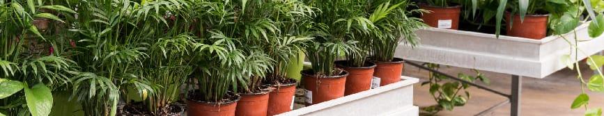 L'etichetta ed il processo di tracciabilità delle piante